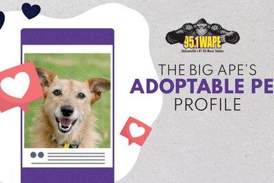 Pet Profile: Meet Summer